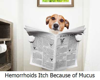Hemorrhoids Itch Because of Mucus