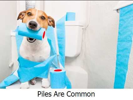 Piles Are Common