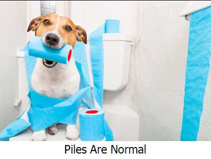 Piles Are Normal
